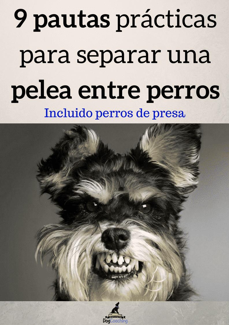 9 pautas prácticas para separar una pelea entre de perros