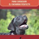12-pasos-para-conseguir-el-cachorro-perfecto-2