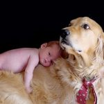 El perro y la llegada del bebé