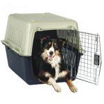 Claves para usar correctamente el transportín con tu perro