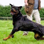 Qué es un perro reactivo y cómo se trata
