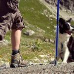 Ejercicio físico en el perro