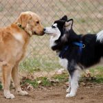Cómo deben saludarse los perros