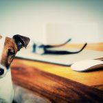 La Academia Dog Coaching abre sus puertas