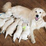Separación temprana de la madre | Consecuencias
