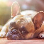 La depresión en los perros | Cómo identificarla