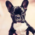 El cachorro y el autocontrol