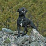 Cómo enseñar a tu perro a ladrar a la orden