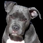 Instinto de presa & perro de presa (1ª parte)